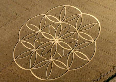 flor de la vida -  circulos en las cosechas, crop circles